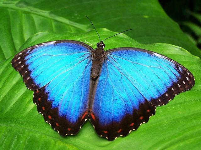Controlling the butterflies